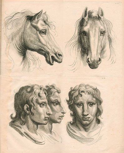 The narrow forehead and hooked noses of the rabbit-men were signs of lesser character in his ''system''; the rabbit people look undeniably stupid. By contrast, the profiles of the horse and his lookalike suggest a nature that is impetuous, noble and proud, at least to he suggestible and the horse loving.
