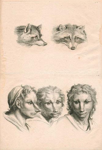 Le Brun Fox Man